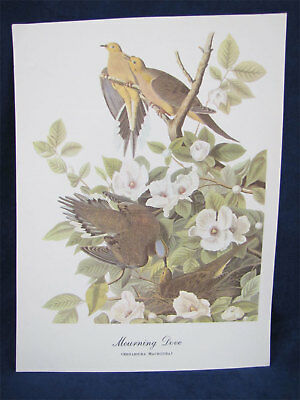 Vintage Audubon Best Loved Bird Prints-Mourning Dove