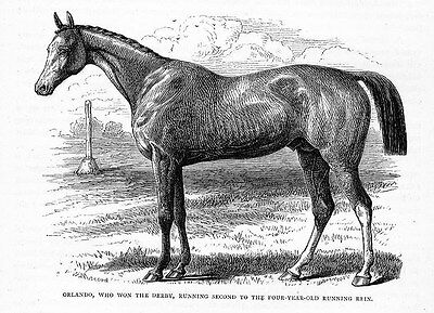 Racing Horse Orland Who Won The Derby, Race Horse Print