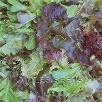 Red Green Baby Leaf Lettuce Inc 7 Driffant 4 Red And 3 Green Ap150 Seed Freepost