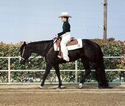 "BLACK 1.25# 34-36"" New Show Horse KATHY'S TAIL Extension FREE US Shipping & bag"