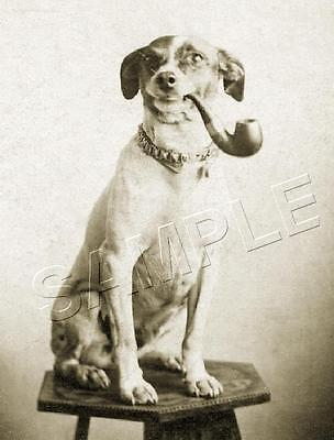 ANTIQUE JACK RUSSELL DOG with PIPE VINTAGE CANINE PHOTO *CANVAS* ART PRINT
