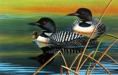 "Calm Reflections By Cynthie Fisher Loon Print 12"" x 7.75"""