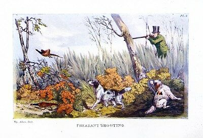 Pheasant Hunting Shooting In Thicket With Dogs Spaniels, Vintage Sportsman Hunt