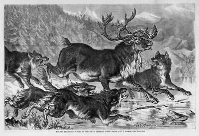 Wolves Attacking Deer Stag On The Ice, Pack Of Wolves Ready To Eat Deer, Wolf