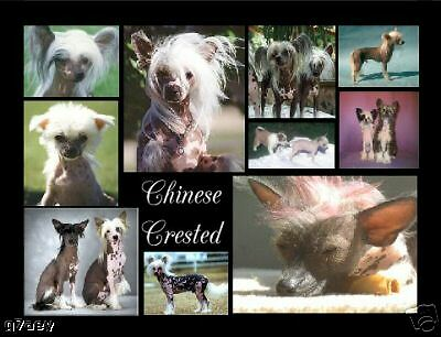 Chinese Crested Montage Mouse Mat Can Be Personalised