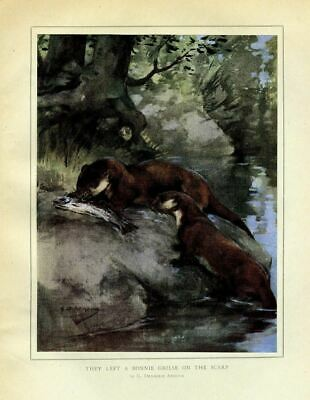 Otter Eating Salmon Along The Shore, 1919 Antique Color Print, Wildlife, Otter