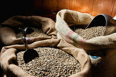 To 100 lbs Peru Approcassi Cajamarca FTO Shade Grown Fresh Green Coffee Beans