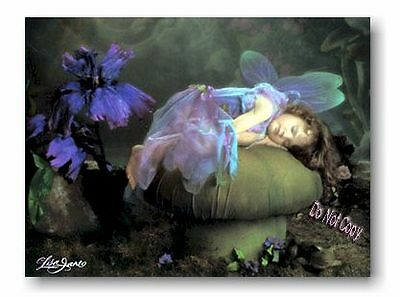 Fairy Sleeps - Lisa Jane Frameable Time Limited Collector Art Faerie Gift Sale*