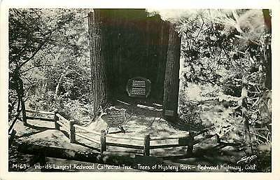 CA-REDWOOD HIGHWAY-TREES OF MYSTERY PARK-CATHEDRAL TREE-RPPC-MAILED 1948-Q5921