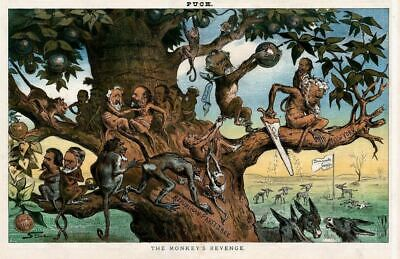 Monkey Republican Party Tree Democratic Donkey Camp New York Garfield Blaine