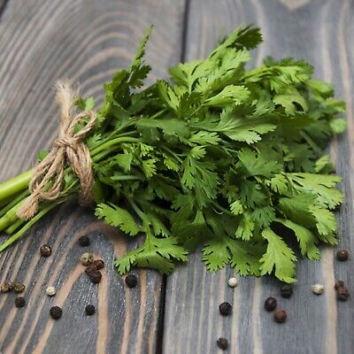 Seeds Coriander Russian Organic Heirloom Herb Seed Dhania Chinese Parsley