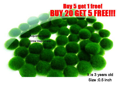 MossBall-rare live plant(keep in water.Grow slower than fern) EASY!