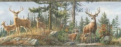 Lodge Hunting Wallpaper Border White Tail Crest Buck Deer HTM48462B