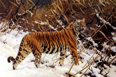 SIBERIAN TIGER IN A WINTER LANDSCAPE 1919 PAINTING BY HUGO UNGEWITTER REPRO