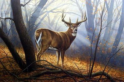 Rosemary Millette In His Prime Deer Buck Winter Art Print Signed and Numbered