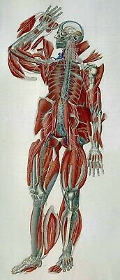 Repro 19th Century Anatomical Print by Paolo Mascagni 1833