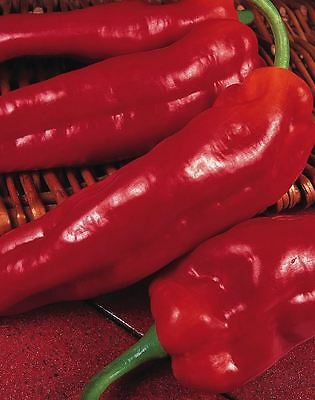 Vegetable - Pepper - Long Red Marconi - 200 Seeds