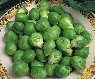 Vegetable - Brussels Sprout - Evesham Special - 400 Seeds - Economy