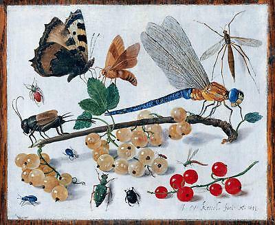 17th Century Natural History Print of Insects ref #2