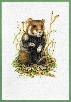 COMMON HAMSTER ~ Art Print with Info Sleeve
