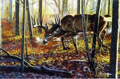 "Hot on the Trail By Cynthie Fisher Buck Deer Print  12"" x 7.75"""