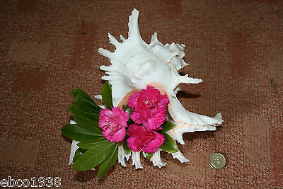 Large Murex seashell for flower arranging