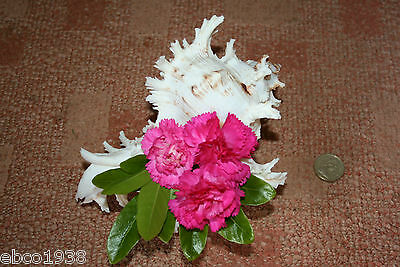 Large Murex seashell for flower arranging, display, etc.