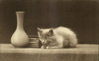 Sweet Fluffy Grey Kitten Beside Book and Vase c1910 Postcard