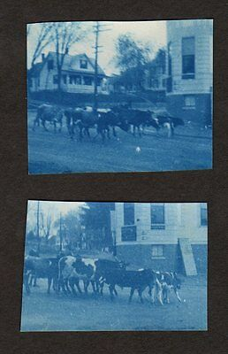 (2) c. 1895 CATTLE DRIVE IN TOWN, KANSAS CYANOTYPE Photo