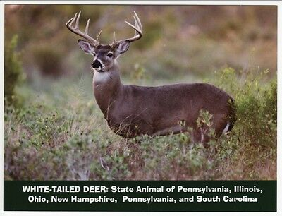 Postcard White-tailed Deer State Wildlife Animal of NH OH IL PA SC with Error