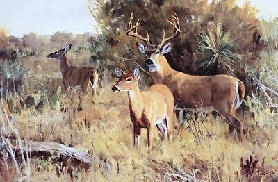 BRUSH COUNTRY ESCORT TEXAS HILL COUNTRY DEER SCENE AT A LOW PRICE