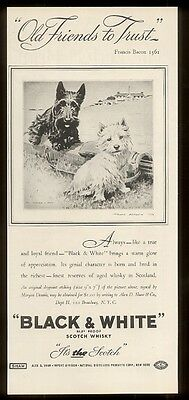 1936 Scottish Terrier & Westie on golf course Black & White Scotch whisky ad