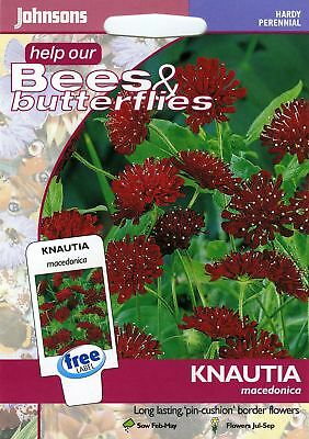 Johnsons Seeds - Pictorial Pack - Flower - Knautia macedonica - 50 Seeds