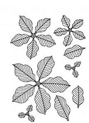 Creative Expressions Stamp - Pinstripe Poinsettia Set 8 Pre Cut Stamps - UMS576