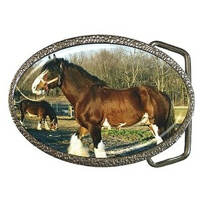 Sabino Clydesdale Horse Photo Belt Buckle New