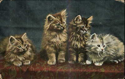 Cats Kittens Fluffy Cute c1910 Old Postcard