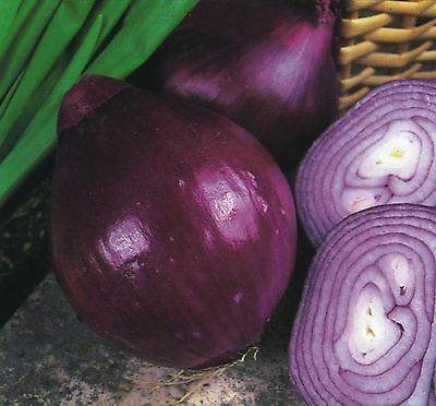 Vegetable - Kings Seeds - Onion - Red Brunswick - Pictorial Pack
