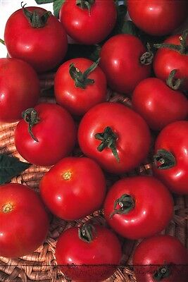 Vegetable - Kings Seeds - Pictorial Packet - Tomato - Moneymaker
