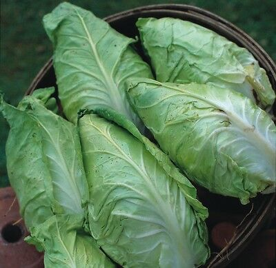 Vegetable - Kings Seeds - Pictorial Packet - Cabbage - Hispi F1