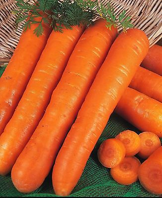 Organic Vegetable - Carrot - Early Nantes - 3000 Seeds