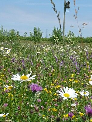 Wild Flower - Special Meadow Seed Mix - 26 Species  - 4g