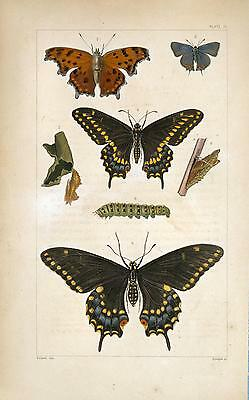 2 x 18th Century Natural History Print's of Insects #9