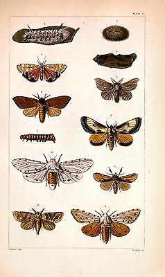 2 x 18th Century Natural History Print's of Insects #7