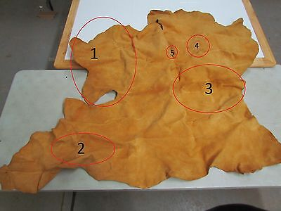 "56""x 40&1/2"" Native American Tanned Hide Commercial Way"