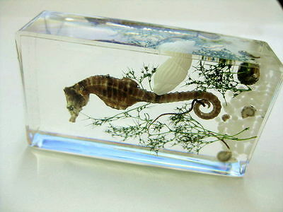 new insect styel sea dragon,sea grass ,white shell,stone Specimen (Paperweight)