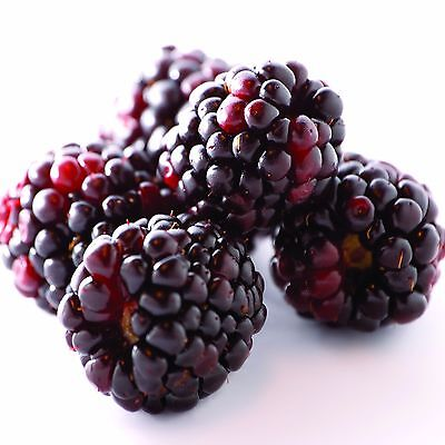JUICY BOYSENBERRIES Candle/Soap Making Fragrance Oil,Oil Burners,Diffusers