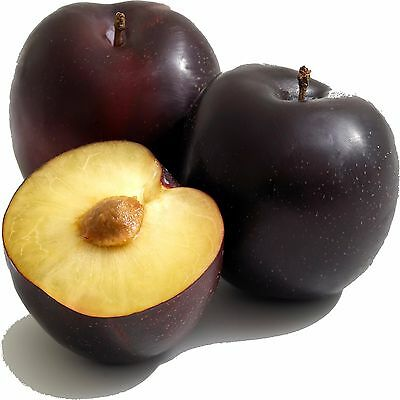 JUICY PLUMS Candle/Soap Making Fragrance Oil,Oil Burners,Diffusers