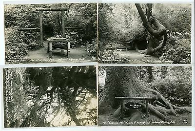 Lot of 4 Trees of Mystery Redwood Highway California Real Photo Postcards #16278