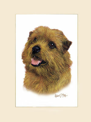 Original Norfolk Terrier Painting by Robert J. May