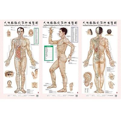 Set of 3 Chart Men Acupoint Body Acupuncture Point Educational Teaching Meridian